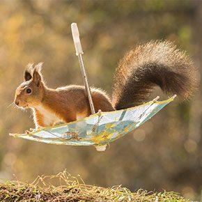 nature animal photography backyard squirrels geert weggen thumb290